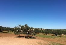 Ziegen im Baum